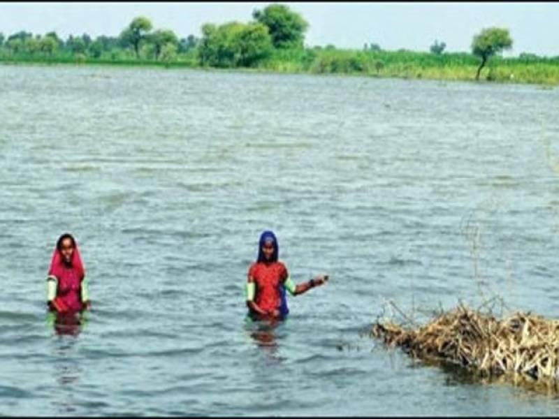 اندرون سندھ گزشتہ چار روز سے جاری بارشوں نے بڑے پیمانےپر تباہی مچادی ،مکانوں کی چھتیں گرنے سے بیس افراد جاں بحق جبکہ متعدد زخمی ہوگئے