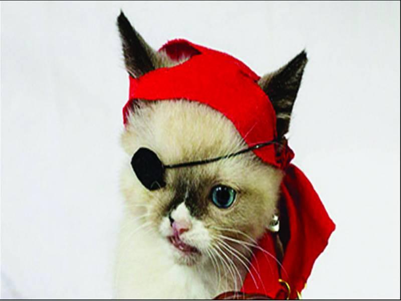 امریکہ میں بلی بحری قذاق بن گئی