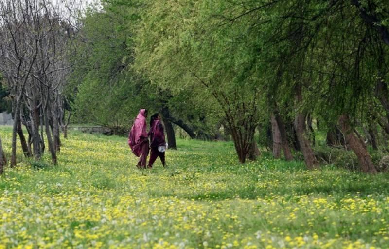 اسلام آباد میں بارش کے بعد پولن کی مقدار انتہائی کم ہو گئی