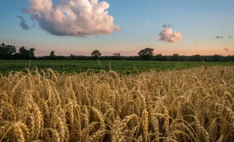 ملک بھر میں بارشیں اور سیلابی ریلے،گندم کی ہزاروں ایکڑ فصلیں تباہ