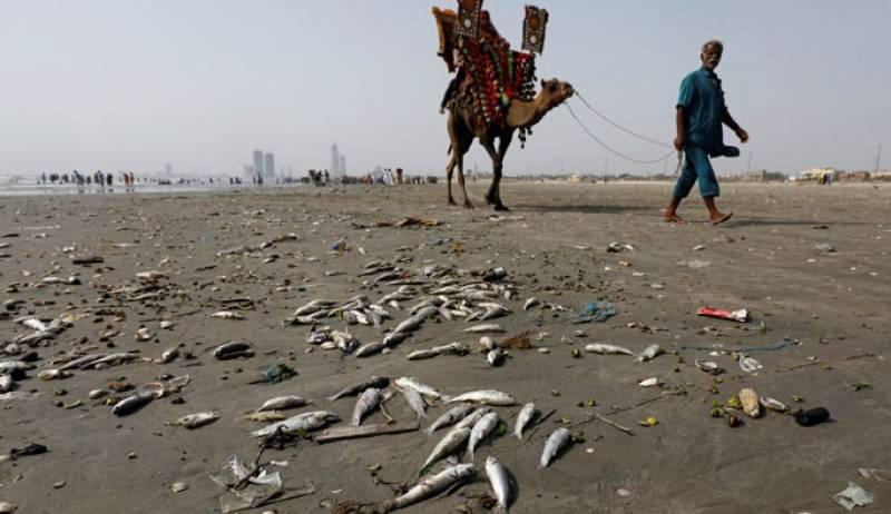 کراچی کے ساحل پر بڑی تعداد میں مردہ مچھلیاں آگئیں