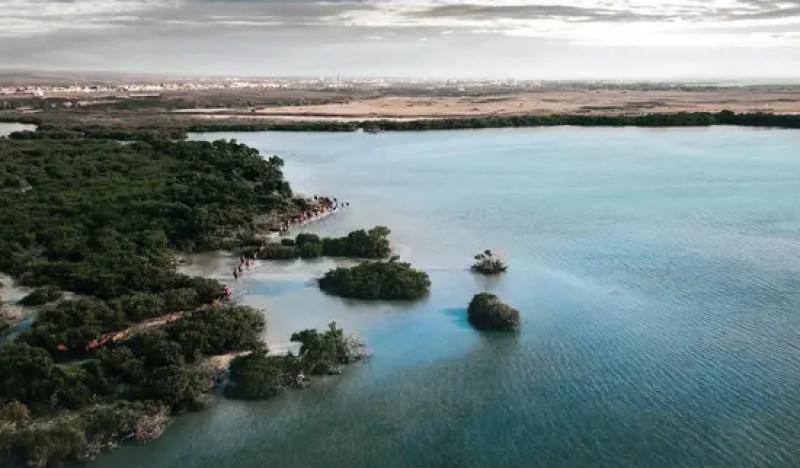 سعودی عرب میں سمندر سے گذرتے اونٹوں کے قافلے کا دلفریب منظر،ویڈیووائرل