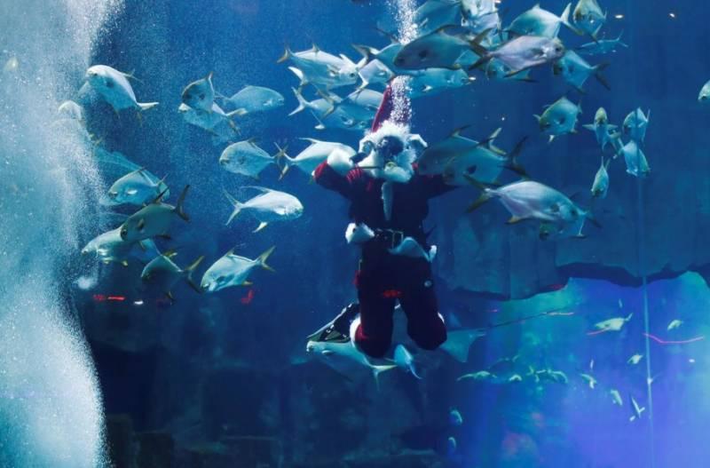 کرسمس:میونخ کا سانتا کلاز مچھلیوں کےایکوریم میں جا پہنچا