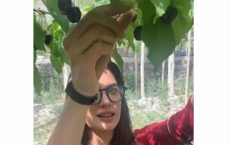 مہوش حیات کی تازہ چیری کھانے کی ویڈیو وائرل