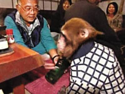 بندراپنی شرارتوں سے انسانوں کو تنگ کرنے میں مشہور ہیں، انہی شرارتیوں کے قبیلے کے دو بندروں نے جاپان کے ایک ریسٹورنٹ میں ویٹرکی نوکری کرلی ہے۔