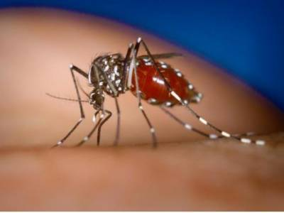 ڈینگی وائرس کے مریضوں میں مسلسل اضافہ ہوتا جارہا ہے جس سے پنجاب میں متاثرین کی تعداد ایک سو دس تک جا پہنچی ہے