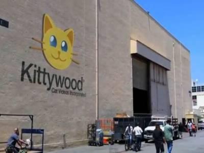 امریکہ میں بلیوں پر فلمیں بنانے کے لئےِِ ِکَٹی ووڈ سٹوڈیو بنا دیا گیا