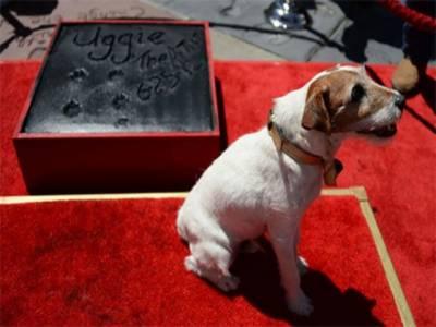 ہالی وڈ کی فلموں میں کام کرنے والا مشہور کتا \\\