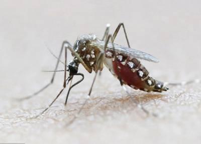 زیکا وائرس اندازوں سے زیادہ خطرناک ہے:امریکی ماہرین