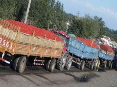 سرحدی کشیدگی' بھارتی تاجروں نے پاکستان کو سبزیوں کی برآمد روکدی: میڈیا رپورٹ