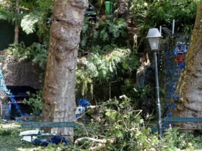پرتگال: مذہبی تقریب کے دوران درخت گرنے سے 13افراد ہلاک، 49زخمی