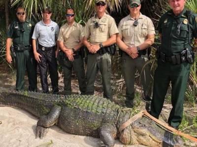 فلوریڈا: پبلک پارک سے ملکی تاریخ کا سب سے بڑا مگرمچھ پکڑا گیا