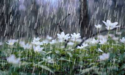 مون سون بارشیں مزید چند روز تک جاری رہینگی:محکمہ موسمیات