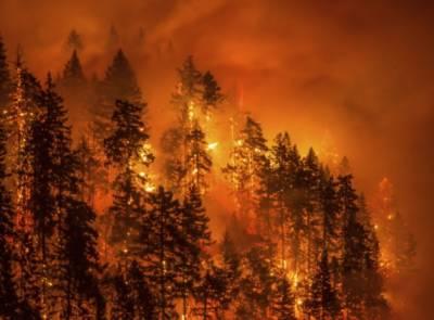 واشنگٹن اور کینیڈا کے جنگلات میں آگ لگ گئی ، آبادی کو خطرات لاحق