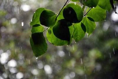 ملک کے بالائی علاقوں میں مون سون بارشیں جاری