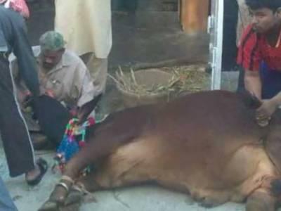 عیدالاضحی کے دوسرے روز بھی جانوروں کی قربانی کا سلسلہ جاری ہے