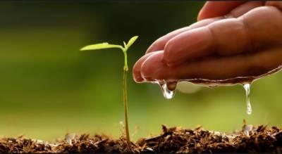 پاکستان کے لئے شجر کاری:آج پندرہ لاکھ پودے لگائے جارہے ہیں