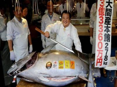 جاپان میں 278 کلو وزنی مچھلی 30 لاکھ ڈالر میں فروخت