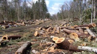 بدین میں ہزاروں ایکڑ اراضی پر واقع جنگلات کا صفایا