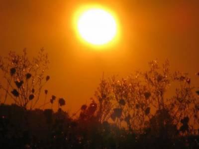 گرمی کی شدید لہر آنے کا خدشہ، محکمہ موسمیات نے خبردار کردیا