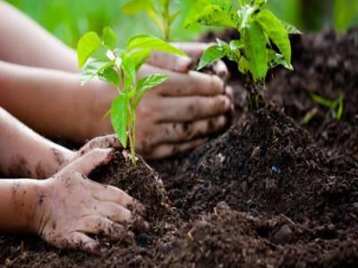 وزیراعظم کا10 ارب درخت لگانے کی سونامی مہم کو کامیاب بنانے کیلئے مشترکہ کوششوں پر زور