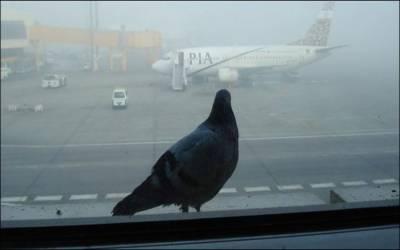 لاہور ایئرپورٹ پر پرندوں کی اڑان، 7خطرےکے پیش نظر پروازوں کا رخ مختلف شہروں کی جانب موڑ دیا گیا
