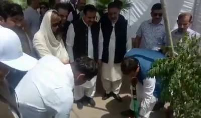 وزیراعلیٰ پنجاب نے شجرکاری مہم کا افتتاح کردیا