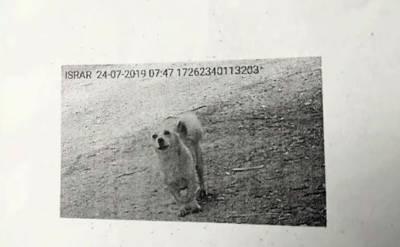 پشاور الیکٹرک سپلائی کمپنی نے صارف کے بل پر ریڈنگ کے بجائے کتے کی تصویر لگاکر بھیج دی