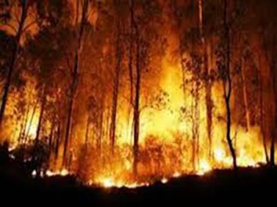 برازیل کے صدر کی مسلح افواج کو جنگل میں لگنے والی آگ پرقابو پانے کیلئے مدد کرنے کی ہدایت