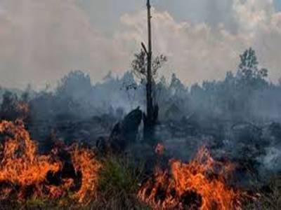 انڈونیشیا کے جنگلات میں آگ لگنے سے کا دھواں ملائیشیا اور سنگاپور تک جاپہنچا