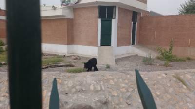پشاور کے چڑیا گھر سے بھالو لاپتہ