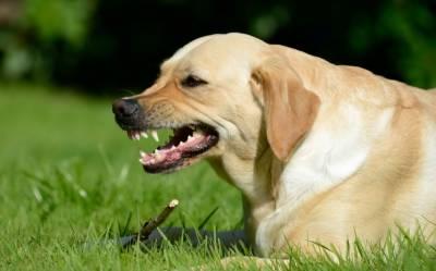 امریکا:کتے نے فائرنگ کر دی،خاتون کو گولی لگ گئی،پولیس حیران