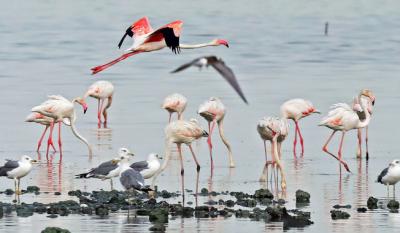 سعودی عرب:500 اقسام کے پرندوں کا مسکن
