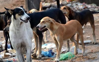 کراچی :کتے کاٹنے کے واقعات میں اضافہ ،21افراد ہسپتال لائے گئے