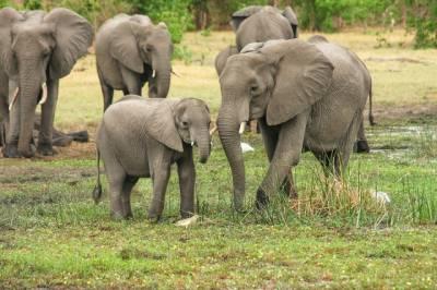 زمبابوے میںخشک سالی سے گزشتہ 2 ماہ کے دوران55 ہاتھی ہلاک