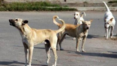 کراچی : آوارہ کتے کے کاٹنے سے1 اور شخص جاں بحق