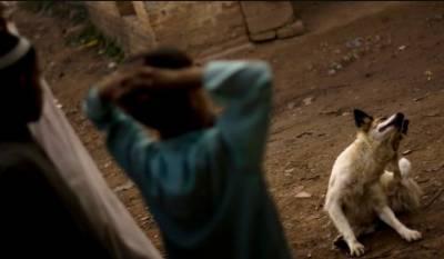 کراچی:شیرشاہ میں پاگل کتے نے 3 افراد کو کاٹ لیا