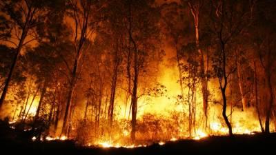 آسٹریلیا کے جنگلات میں لگنے والی آگ سے زخمی ہونے والوں کی تعداد 120 ہو گئی