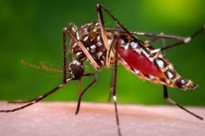 سندھ میں ڈینگی وائرس بے قابو ،24گھنٹے میں ڈینگی کے 151نئے کیسز سامنے آگئے