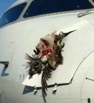 پی آئی اے کا ایک اور طیارہ حادثے سے بال بال بچ گیا