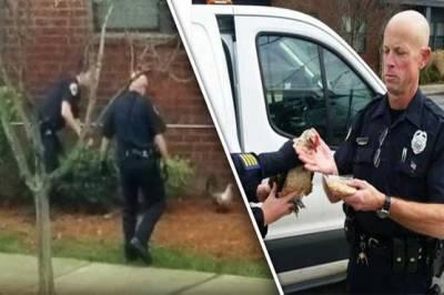 ایک مرغ نے امریکی پولیس اہلکاروں کی دوڑیں لگوا دیں