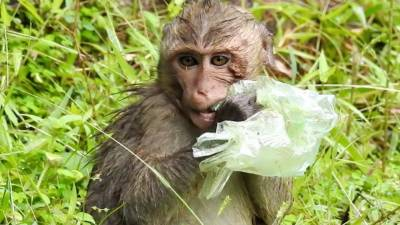 چڑیا گھر میں بندر کو پلاسٹک بیگ سے کھیلتے دیکھ کر فواد چوہدری اور زرتاج گل کا رد عمل
