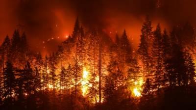 آسٹریلوی جنگلات میں لگنے والی آگ کی تفتیش کرانے کی تجویز