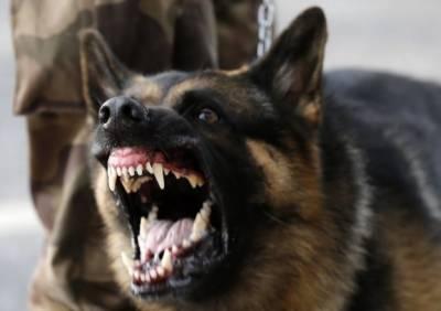 راجن پور: کتے نے 3بچوں کو کاٹ لیا،تشویشناک حالت میں اسپتال منتقل