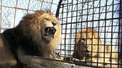 مصر، نایاب پرندوں اور جانوروں کو بچا لیا گیا
