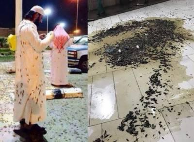 سعودی عرب میں ٹڈی دل کے نئے حملے کا خطرہ