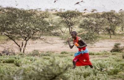 افریقہ میں ٹڈی دل کا بڑا حملہ،روزانہ ڈھائی ہزار لوگوں کی خوراک ہڑپ