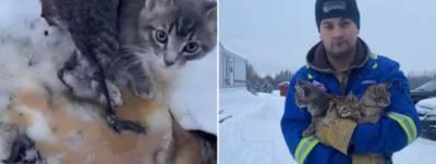 کینیڈین شہری نے گرما گرم کافی سے بلیوں کی جان بچالی