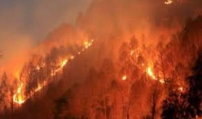 چلی،جنگل میں لگنے والی آگ 4 ہزار ہیکٹر رقبے پر پھیل گئی