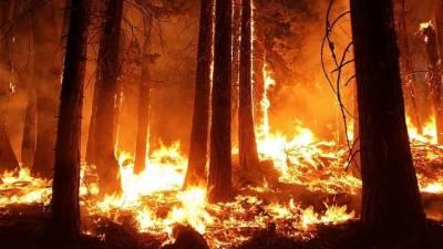 چمن: زیتون کے جنگلات میں 3 روز سے لگی خوف ناک آگ بجھائی نہ جا سکی